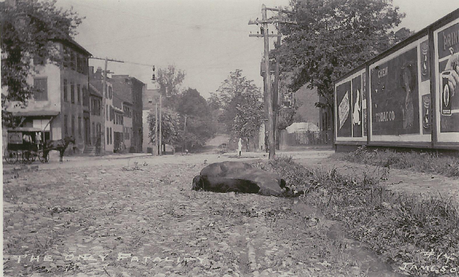 Dead horse lying on Alexandria Street
